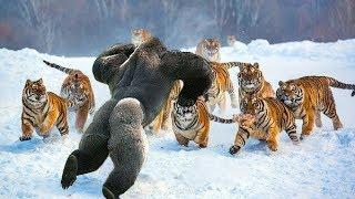 Самые Бесстрашные Животные в Мире