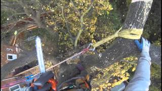 T.H Tree Services Removing a tree within a confined space in Essex.