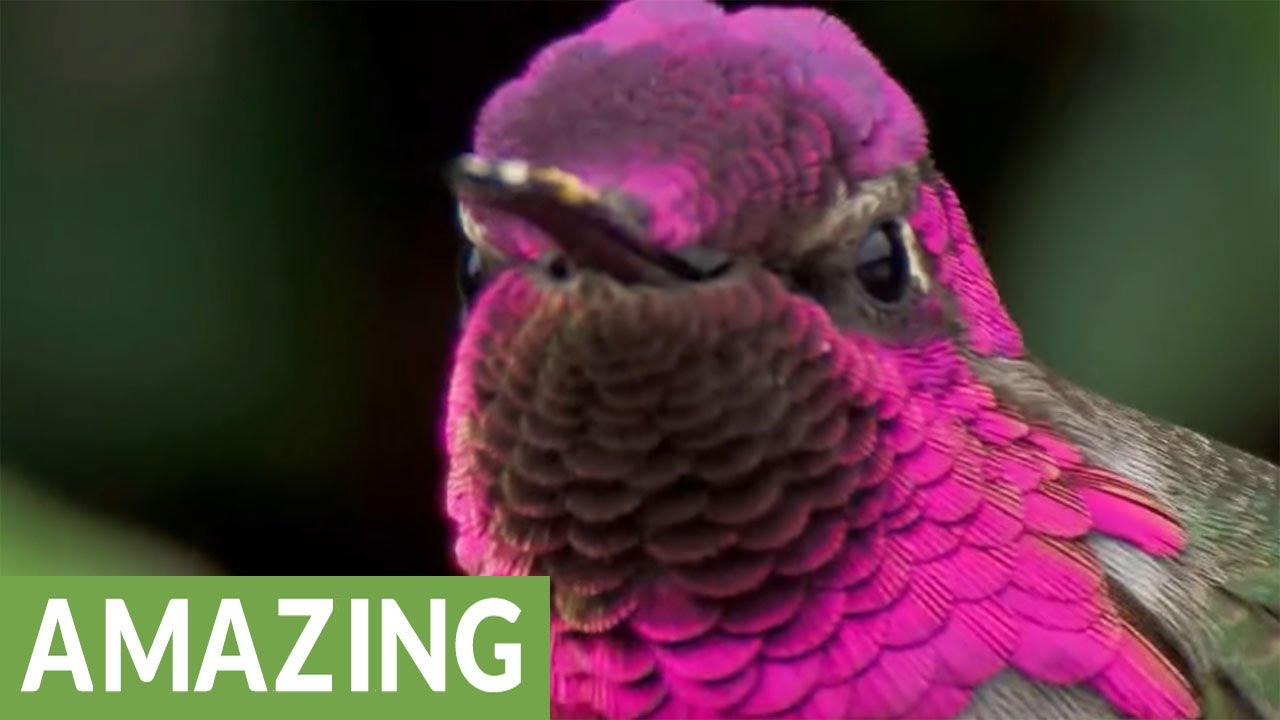 Surakav Bird, An Amazing Creation of Nature