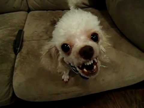 Brandon's alien dog