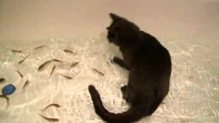 Кошка с рыбами в ванне с водой. Приколы.