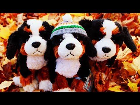 Webkinz Bernese Mountain Dog (Unboxing & Review)