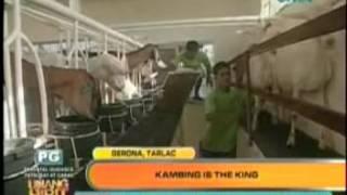 GMA 7 - Unang Hirit visits JSJ Goat Farm in Gerona, Tarlac