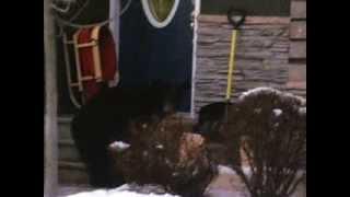 Black Bear Attacks Rcmp Crusier