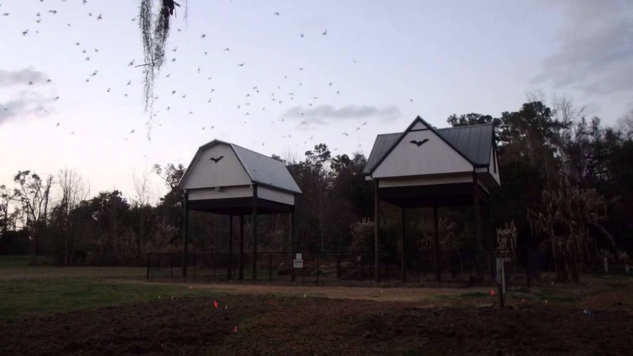 University Of Florida Bat House