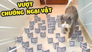 Thử thách mèo vượt chướng ngại vật giống TIKTOK | The Happy Pets #48