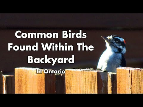 Wild Birds Found In My Backyard - Ontario Canada - Part 2 - Bird Sounds