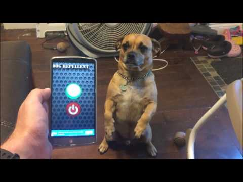Dog Repellent App For Android Review. Does It Work?? Watch and see!