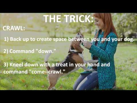 dog-training-101