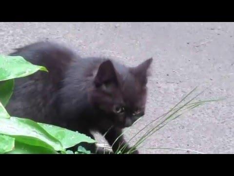 городские коты 2