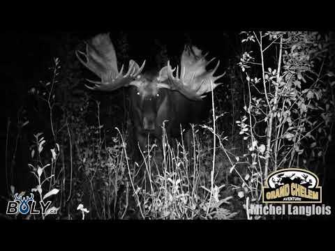 Yukon moose Trophy / Boly camera