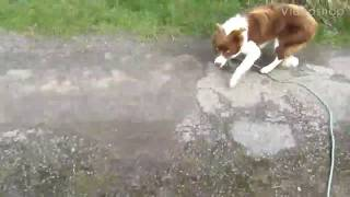 Herding dog, good problems with solutions.