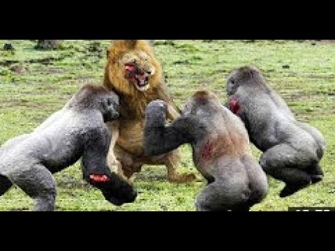 Best Moments Wild Animal Attacks - Craziest Animal Fights Caught On Camera