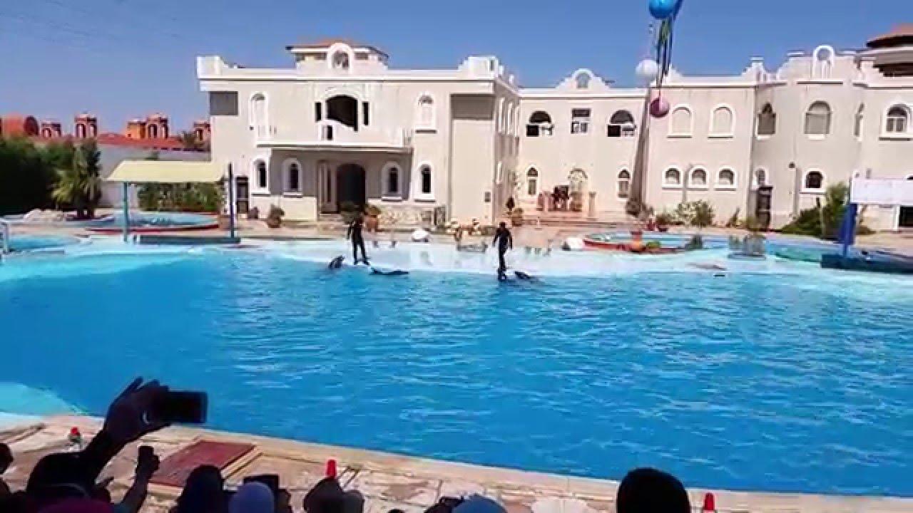 عرض الدولفين - شرم الشيخ Dolphin Show - YouTube