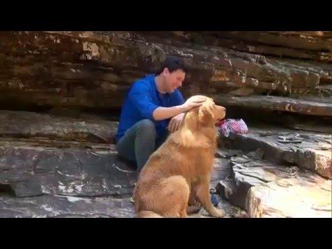 Cães São Os Guias Turísticos No Sul De Minas Gerais #arquivoDE