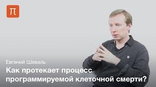 Евгений Шеваль - Гибель клеток