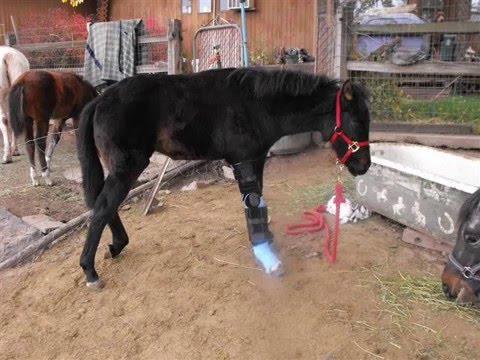 horse broken leg