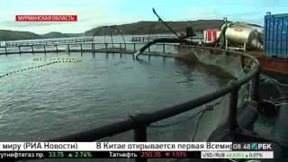 видео Перспективы развития российской аквакультуры