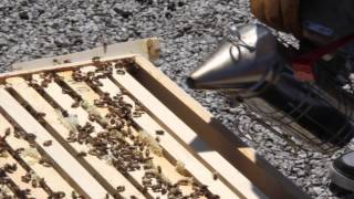 An Introduction to Beekeeping: Equipment Descriptions