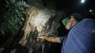 anyone who touches this tree dies in 7 days... (devil tree)