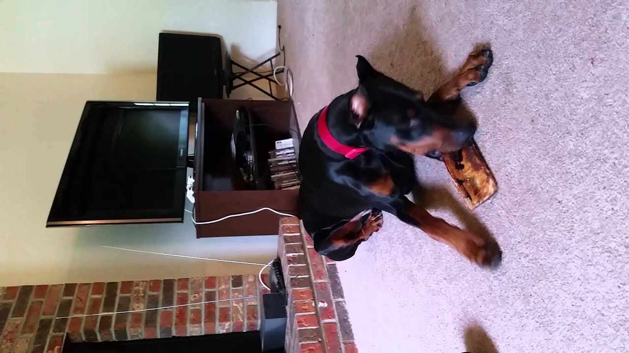 how to make my dog stop chewing furniture