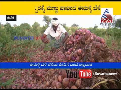 Onion Growers in Trouble Due to Rain | Suvarna News