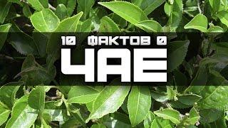 10 ИНТЕРЕСНЫХ ФАКТОВ О ЧАЕ (выпуск #24)