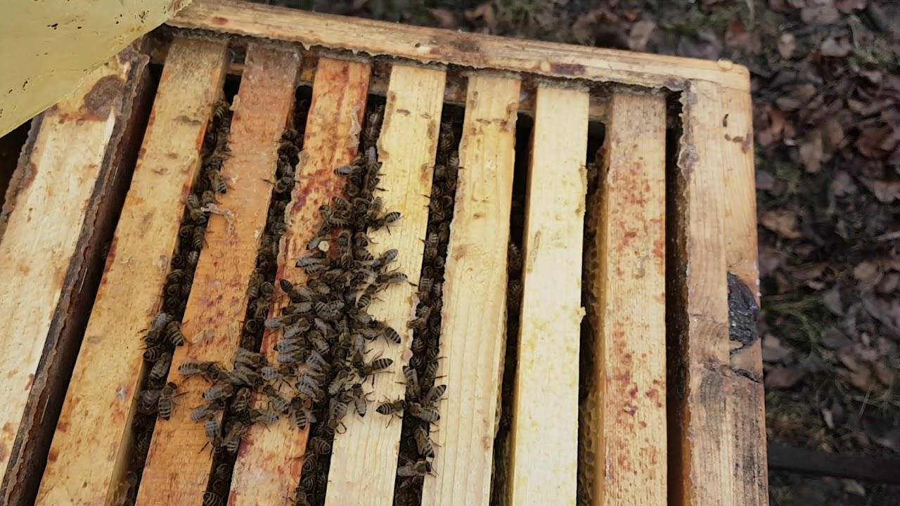 Зимовка пчел.  Конденсат в ульях 10.12.2018