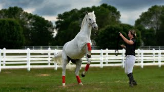 🐴 Unmounted exercises with horses // Work in hand
