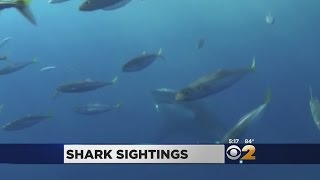 Sharks Seen In New York Waters