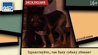 Здравствуйте, там Вашу собаку убивают   15 апреля'15