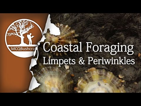MCQBushcraft Coastal Foraging & Cooking Shellfish