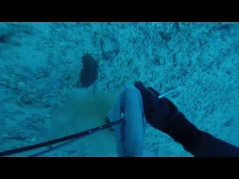 hudson sink gulf mexico 5/15 spearfishing jewfish