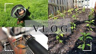 [Toronto Vlog] 봄날씨 즐기며 가드닝, 모종…