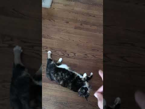 Boogie The Cat Turning Tricks