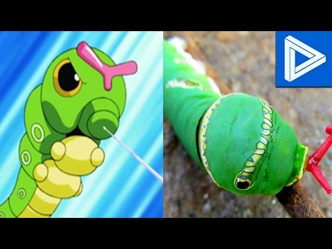 10 Pokemon That ACTUALLY Exist In Real Life!