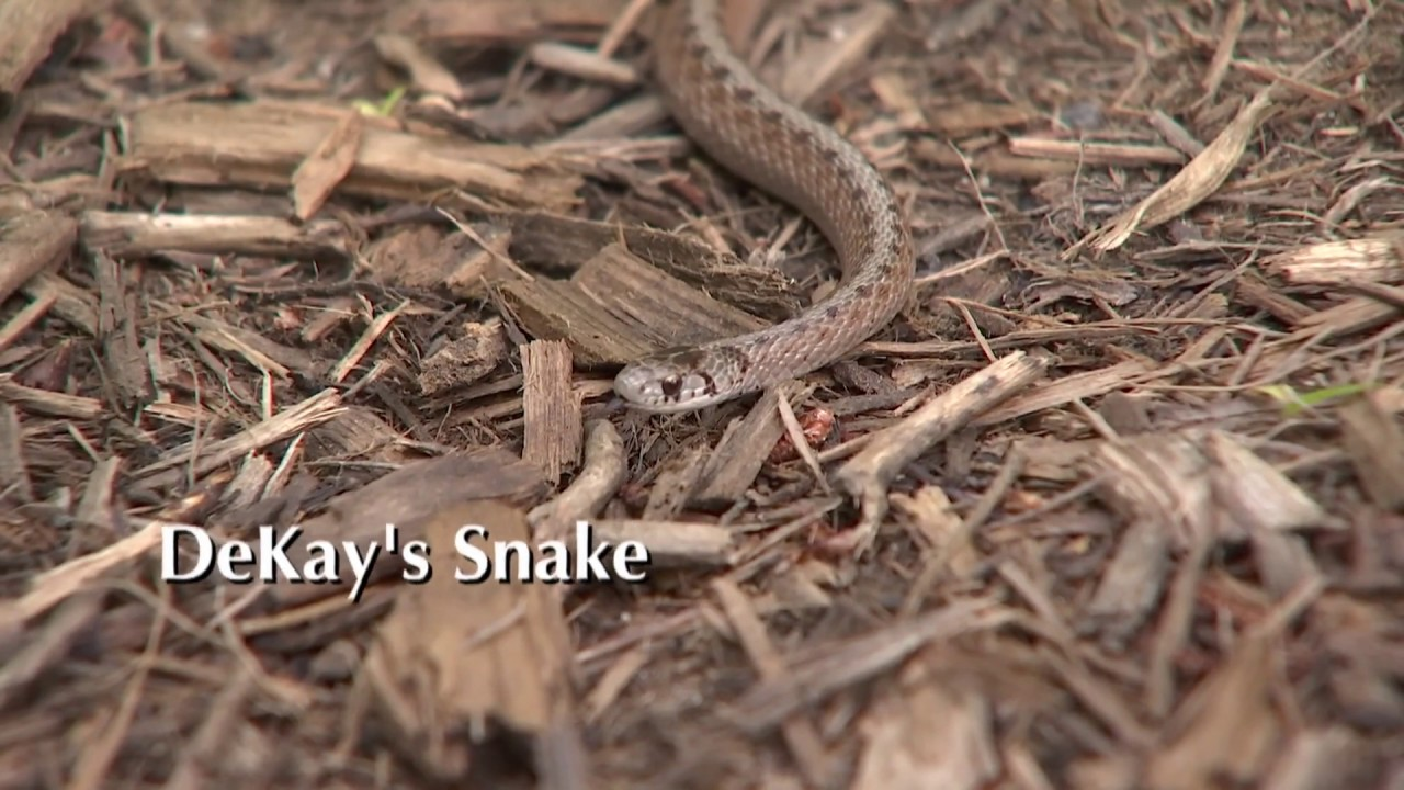 Your Guide To Snakes In Fairfax County News Center
