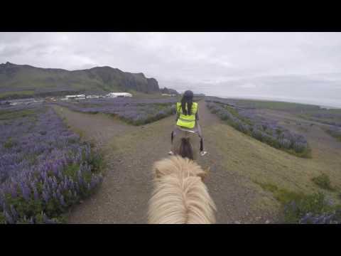 Iceland - Summer 16