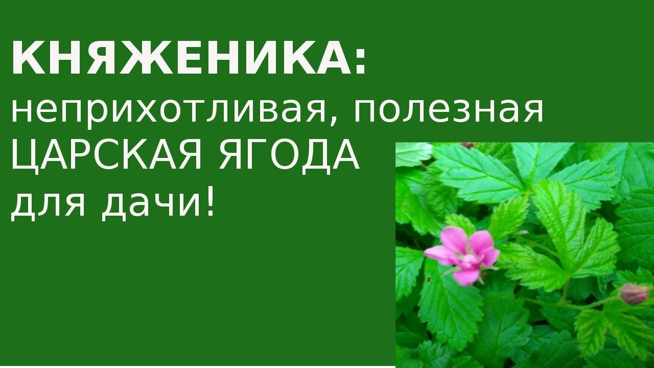 Владимир Кашин: Мы импортируем 1,5 млн тонн плодов и ягод - YouTube