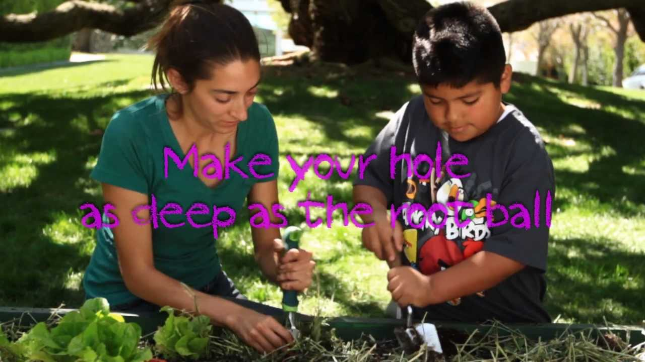 American Heart Ociation Teaching Gardens Steps For Planting Seeds Seedlings You