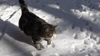 雪とまるとはな。-Snow and Maru&Hana.-