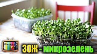 Супер тренд ЗОЖ микрозелень