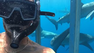shark-diving-in-hawaii-there-were-so-many