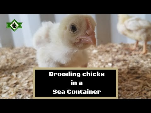 Brooding in a sea container!
