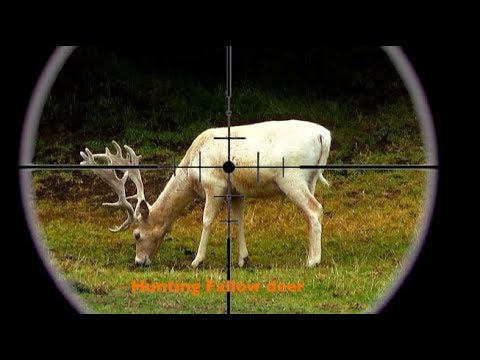 #waikarimoana Hunting Two Fallow Deer With A 22-250 Cal, Rifle In New Zealand # 236