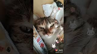 Моя кошка Альма
