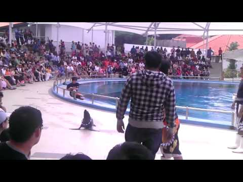 AN INDIAN (Dolphin show)