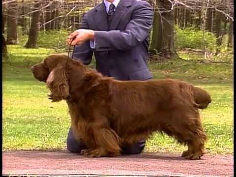 Sussex Spaniel - AKC Dog Breed Series