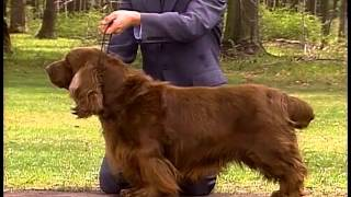 Sussex Spaniel  AKC Dog Breed Series