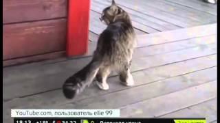 """Новый """"взрыв"""" в интернете - кошка-лошадь"""
